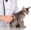 Ветеринарные клиники в Зуевке